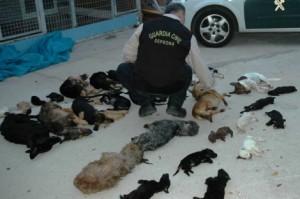 Imágenes de los perros asesinados en Parque Animal.