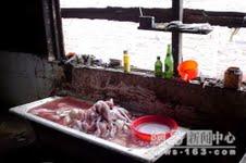 Una bañera vieja es usada para ablandar la piel del pollo muerto. El agua contaminada acelera el proceso de descomposición.