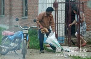 Un empleado recoge un pollo muerto de una casa china. Su destino: el mercado occidental.