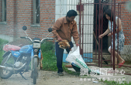 Un empleado recoge un pollo muerto de una casa china. Su destino: el mercado occidental.