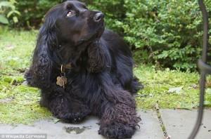 Imagen del perro víctima de un nuevo caso de canibalismo en EEUU.