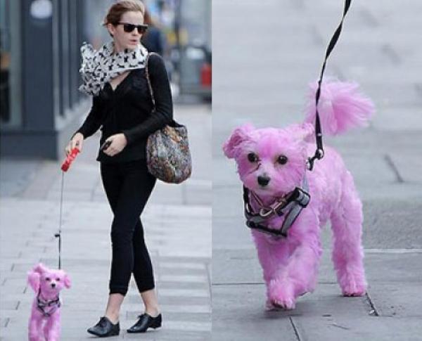 Emma Watson, paseando un gracioso perrito rosa.