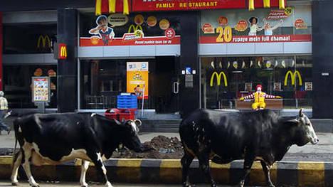 Unas vacas pasan por la entrada de un local de McDonald´s, en India: en ese país son sagradas.