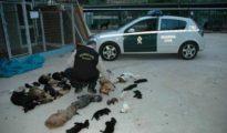 """Algunas de las mascotas asesinadas en la """"Protectora de los horrores"""""""