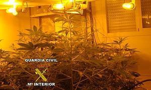 Plantas encontradas en el interior de la vivienda.