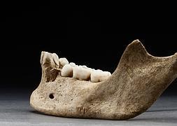 Restos de una mandíbula hallada en un yacimiento en Jamestown.