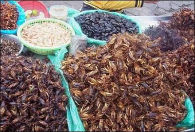 Venta de insectos en un mercadillo en China