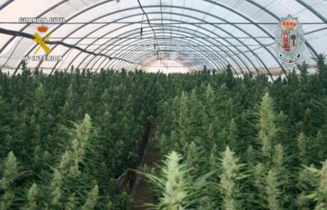 El peso de las plantas ronda las tres toneladas.