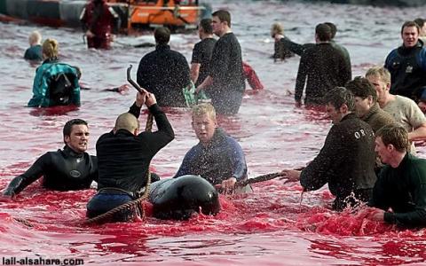 Jóvenes daneses matan a miles de delfines cada año