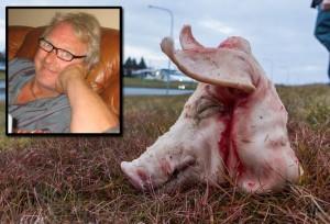 Imagen de la cabeza del cerdo aparecido en el solar donde se construirá la primera mezquita de Islandia. En el recuadro superior, el sueco Óskar Bjarnason
