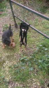Negrito fue ahorcado la semana pasada. Lo encontró Elena en su parcela.