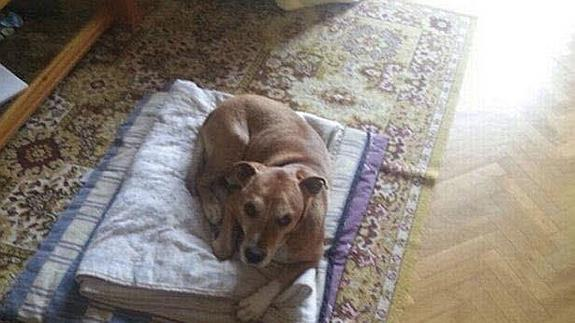 Excalibur, el perro de la auxiliar española Teresa Romero Ramos