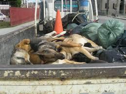 Matanza de perros en Cuba