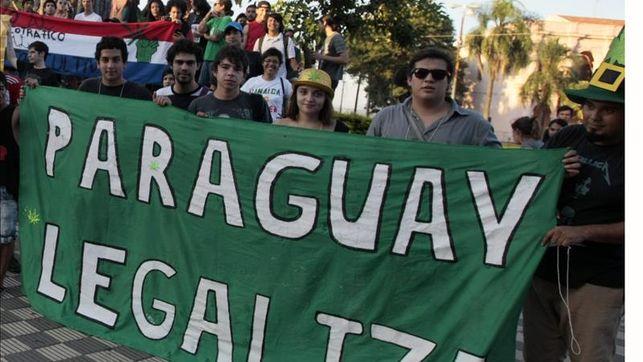 Piden legalizar el cultivo de marihuana para combatir la narcopolítica en Paraguay