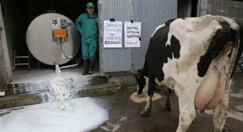 Los ganaderos vierten miles de litros de leche