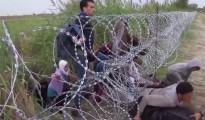 Inmigrantes procedente de Oriente Medio entran a Hungría desde Serbia el pasado 26 de agosto pasando por debajo de una concertina erigida por el Gobierno húngaro. (Imagen: capturada de un vídeo del WSJ)
