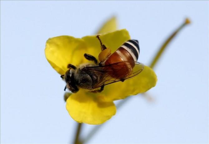 Una abeja en una flor.