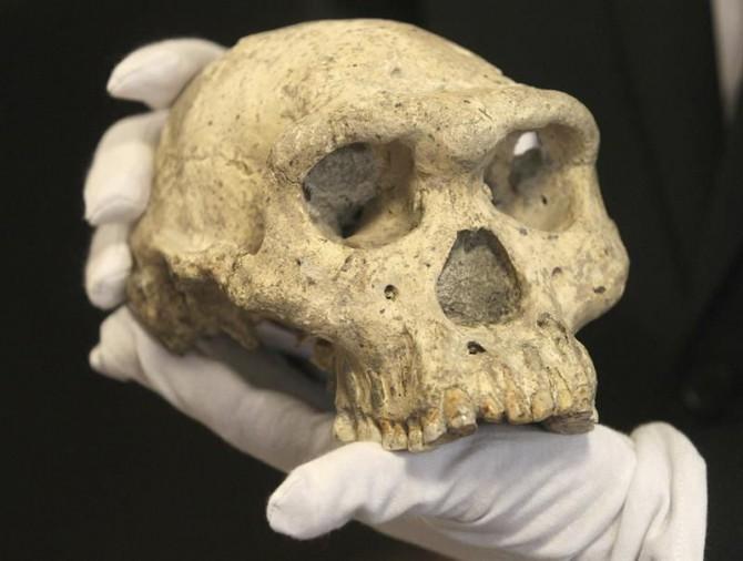 Investigadores de la Universidad de Barcelona (UB) han encontrado evidencias de la posible entrada de homínidos en Europa por el sur de la Península Ibérica hace entre 900.000 y 850.000 años.