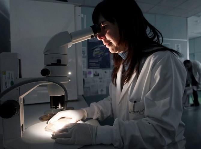 Una científica observa al microscopio unas muestras de cultivos. Investigadores del Hospital Clínic y del IDIBAPS han demostrado la utilidad de una biopsia para confirmar el diagnóstico de la enfermedad de Parkinson en personas con trastornos del sueño, antes de que se manifieste la enfermedad.