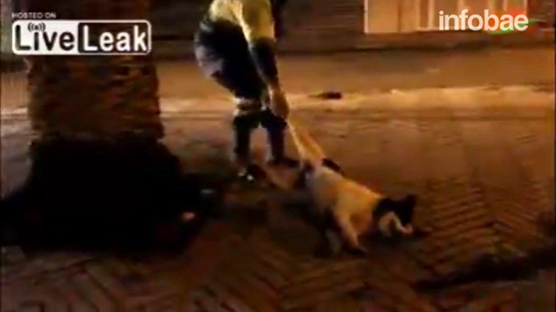 video-perro.jpg