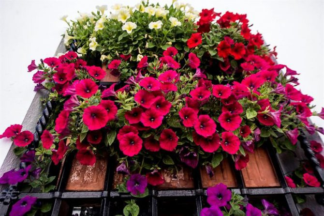 C rdoba tambi n llena de flores sus rejas y balcones for Decoracion cordoba
