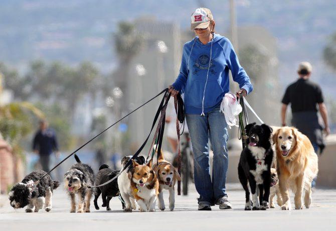 Mujer europea paseando a sus perros.