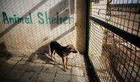 Un perro en un refugio el 19 de febrero de 2016 en la ciudad de Hashtgerd, Irán