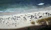 Ballenas muertas en la costa de la Patagonia chilena cerca de Aysen, el 20 de julio de 2016