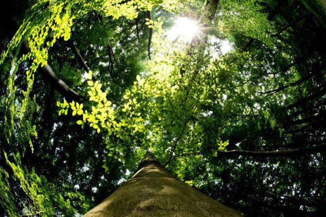 Un bosque al sur de Hanover en el norte de Alemania