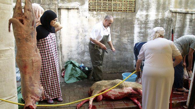 En la imagen, matanza de corderos sin ningún tipo de control en un solar privado.