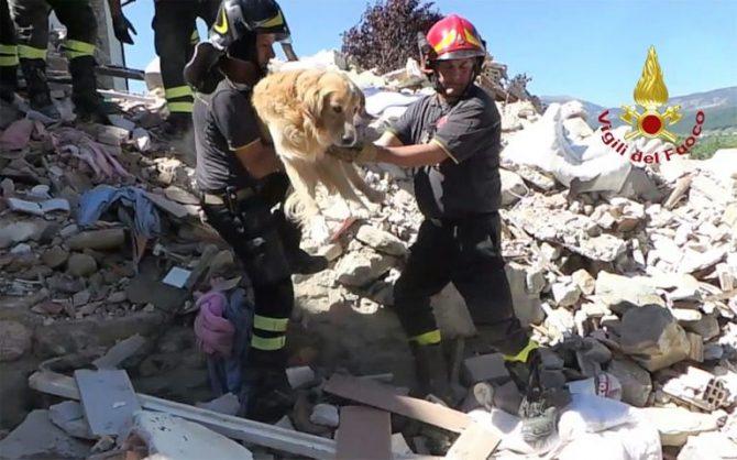 Una captura de pantalla de un video de los bomberos italianos rescatando un golden retriever llamado Romeo de entre los escombros tras el sismo del 24 de agosto, el 3 de septiembre de 2016, en San Lorenzo e Flaviano