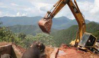 Una excavadora ayuda a crías de elefante a salir de un taque de agua en el que quedaron atrapados el 12 de octubre de 2016 en Xishuangbanna, provincia de Yunnan