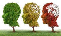 El Alzheimer es la primera causa de demencia en el mundo. Su cura es todavía una ardua búsqueda