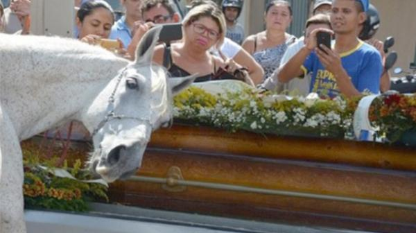 El momento de la despedida del caballo a su jinete