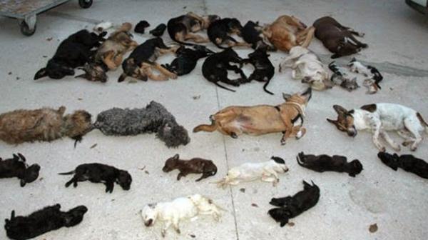 Martín fue acusada de matar a, al menos, 2.183 animales