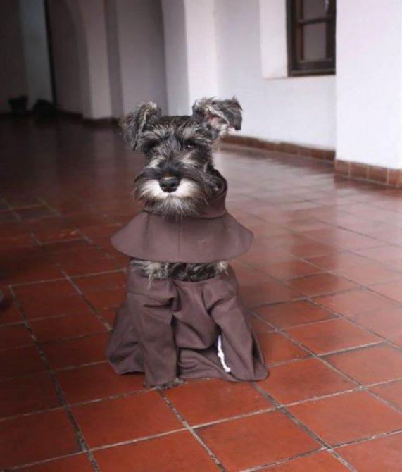 Fray Bigotón, el perro que de la calle terminó en un monasteri