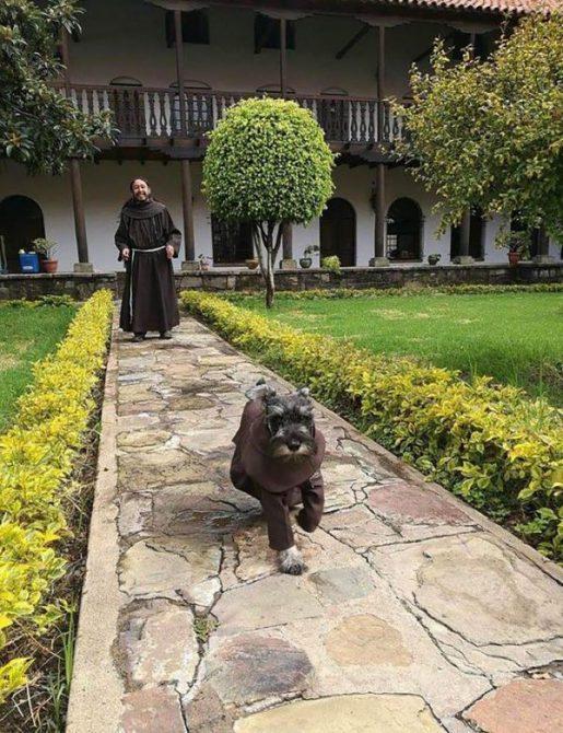 El perro fue bautizado como Fray Bigotón