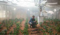 """Una escena de la película """"Misión Rescate"""", en la que el protagonista sobrevive en Marte cultivando patatas"""