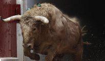 Un toro salta al ruedo de la plaza de toros de Pamplona