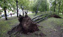 Un árbol caído debido al fuerte temporal de lluvia y vientos huracanados en Moscú