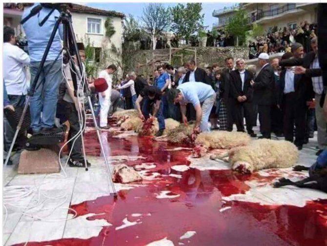 Degollamientos de corderos en una calle de Melilla.
