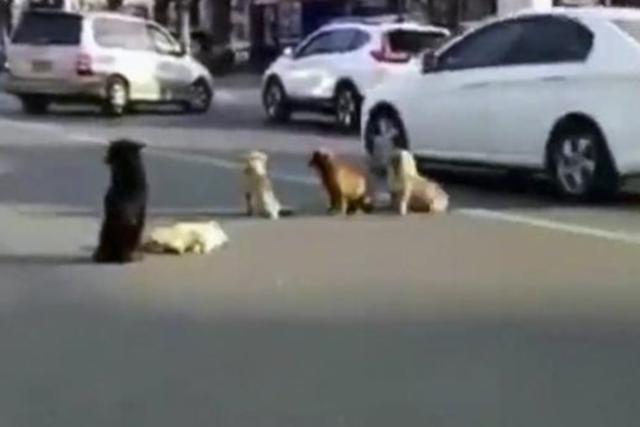 Imagen de los perros tras el atropello mortal.