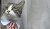 El gato de Julian Assange/ Twitter