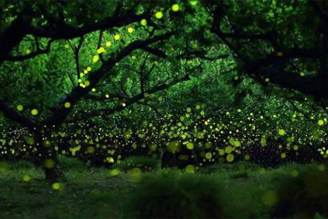 Luciérnagas en un bosque