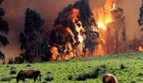 Incendio en las proximidades de Naves (Llanes, Asturias).