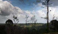 Los hechos ocurrieron en la zona rural del municipio brasileño de Camocin