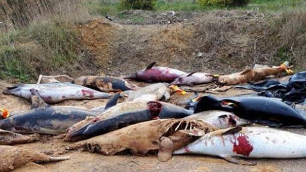 Imagen de los delfines mutilados hallados en Francia - SEA SHEPHERD FRANCE